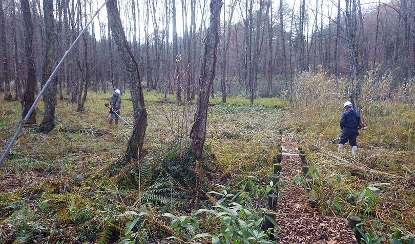 刺巻湿原水芭蕉群生地内草刈り作業風景3